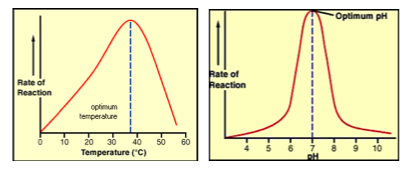 effects of ph on the function